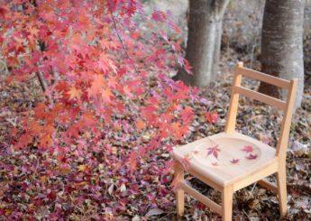 木の椅子展♯15 ライトチェア 10月19日(土)~11月3日(日)